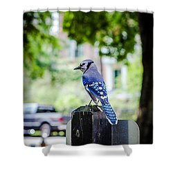 Shower Curtain featuring the photograph Blue Jay by Sennie Pierson