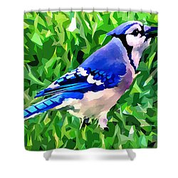 Blue Jay Shower Curtain by Stephen Younts