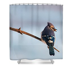 Blue Jay With Nuts Shower Curtain