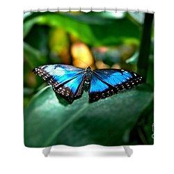 Blue Lit Butterfly Shower Curtain