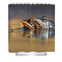 Blue Love ... Mating Moor Frogs  Shower Curtain