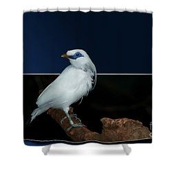 Blue Mask Bandit Bird Shower Curtain by Thomas Woolworth