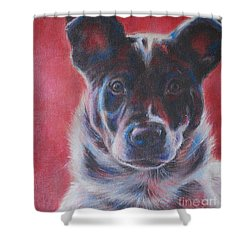 Blue Merle On Red Shower Curtain by Kimberly Santini