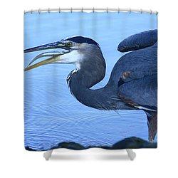 Blue Gulp Shower Curtain