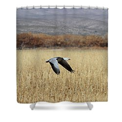 Blue Morph In Flight Shower Curtain by Ruth Jolly