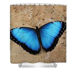 Blue Morpho #2 Shower Curtain by Judy Whitton