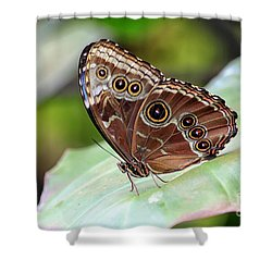 Shower Curtain featuring the photograph Blue Morpho Butterfly by Teresa Zieba