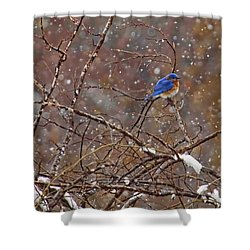 Shower Curtain featuring the photograph Blue Norther by Gary Holmes