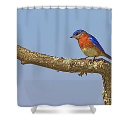 Blue On Blue Shower Curtain by Gary Holmes