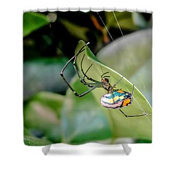 Shower Curtain featuring the photograph Blue Orbweaver by TK Goforth