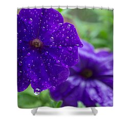 Blue Pansies After A Rain Shower Curtain