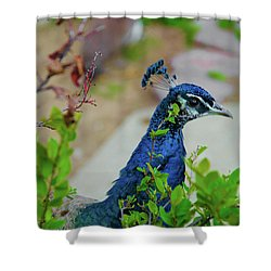 Blue Peacock Green Plants Shower Curtain by Jonah  Anderson