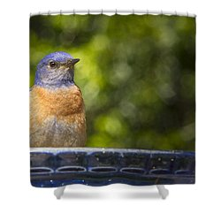 Blue Plate Special Shower Curtain by Jean Noren