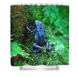 Blue Poison Dart Frog Shower Curtain by DejaVu Designs