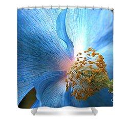 Blue Poppy Shower Curtain by Carol Groenen