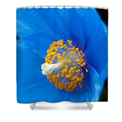 Blue Poppy Shower Curtain by Michael Porchik