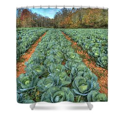 Blue Ridge Cabbage Patch Shower Curtain by Jaki Miller