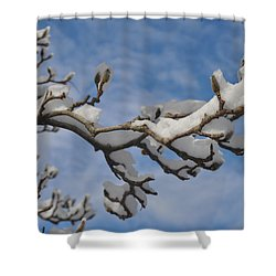Blue Skies In Winter Shower Curtain by Bill Cannon