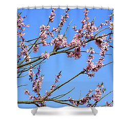 Blue Sky And Pink Blossom. Shower Curtain