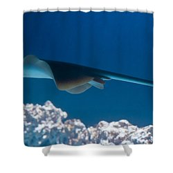 Shower Curtain featuring the photograph Blue Spotted Fantail Ray by Eti Reid