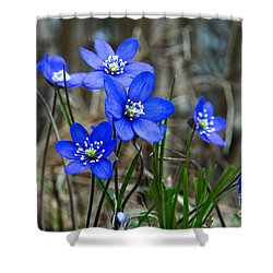 Blue Springtime Shower Curtain