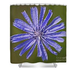 Blue Star... Shower Curtain by Nina Stavlund