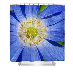 Blue Swan River Daisy Shower Curtain