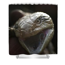 Blue Tongue Lizard Shower Curtain by Joy Watson