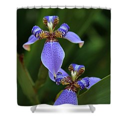 Blue Walking Iris Shower Curtain by Carol Groenen