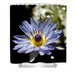 Waterlily After The Rain ... Shower Curtain by Lehua Pekelo-Stearns