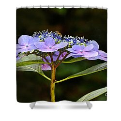 Blue Wave Lacecap And Guest Shower Curtain by Byron Varvarigos