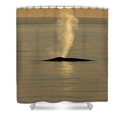 Shower Curtain featuring the photograph Blue Whale At Sunset In Monterey Bay California  2013 by California Views Mr Pat Hathaway Archives