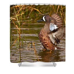 Shower Curtain featuring the photograph Blue-winged Teal by Ram Vasudev
