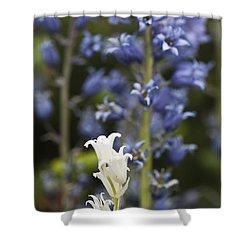 Bluebells 1 Shower Curtain by Steve Purnell