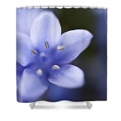 Bluebells 4 Shower Curtain by Steve Purnell