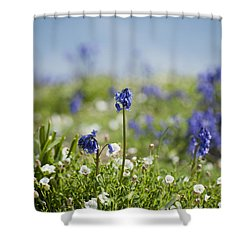 Bluebells In Sea Campion Shower Curtain by Anne Gilbert
