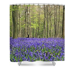 Bluebells Surrey England Uk Shower Curtain