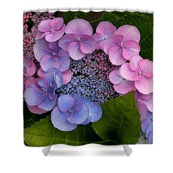 Blueberries And Cream Shower Curtain by Living Color Photography Lorraine Lynch