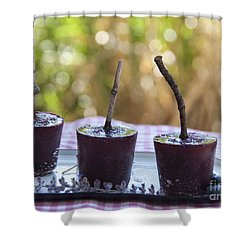 Blueberry Ice Pops Shower Curtain by Juli Scalzi