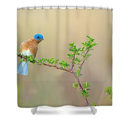 Bluebird Breeze Shower Curtain