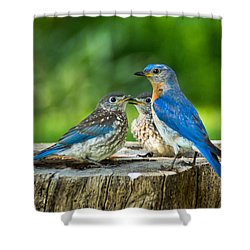 Bluebird - Father And Sons Shower Curtain