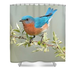 Bluebird Floral Shower Curtain