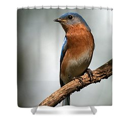 Bluebird- I See You Shower Curtain