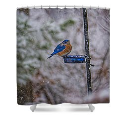 Bluebird In Snow Shower Curtain