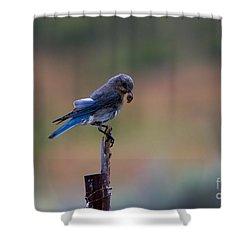 Bluebird Lunch Shower Curtain by Mike  Dawson