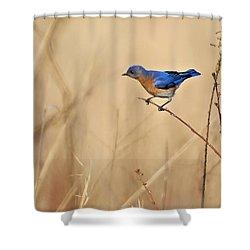 Bluebird Meadow Shower Curtain
