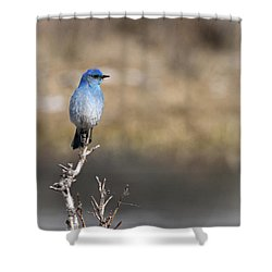Bluebird Of Happiness Shower Curtain by Betty Depee
