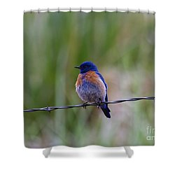 Bluebird On A Wire Shower Curtain by Mike  Dawson