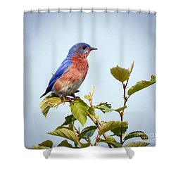Shower Curtain featuring the photograph Bluebird On Top by Kerri Farley