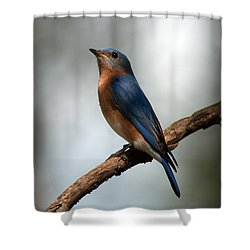 Bluebird -why Yes Shower Curtain